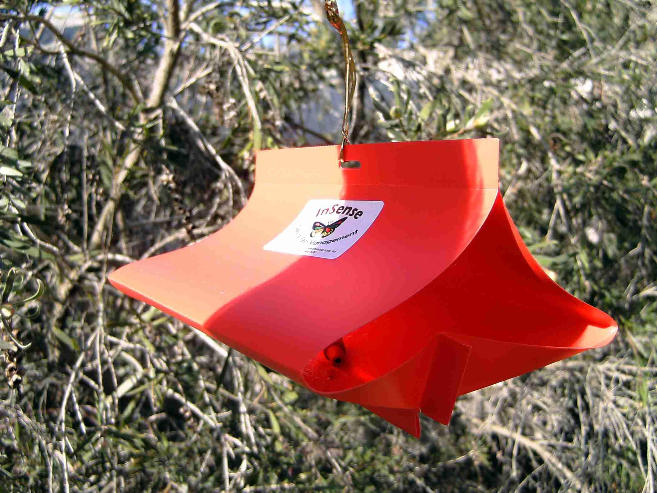 Codling Moth Traps Plantnet 174 Australia
